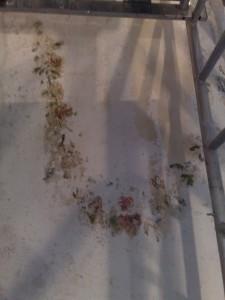 A lépcsőházban feltárt virágfűzérek